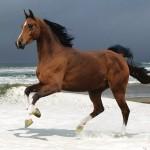 animaatjes-paarden-44772